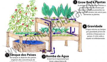 Aquaponia
