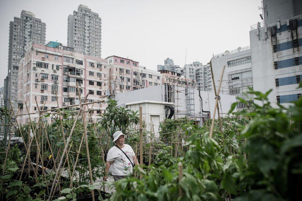 Horta comunitaria em hong kong