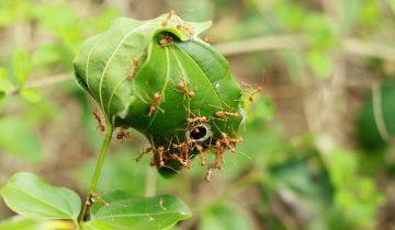 eliminar formigas