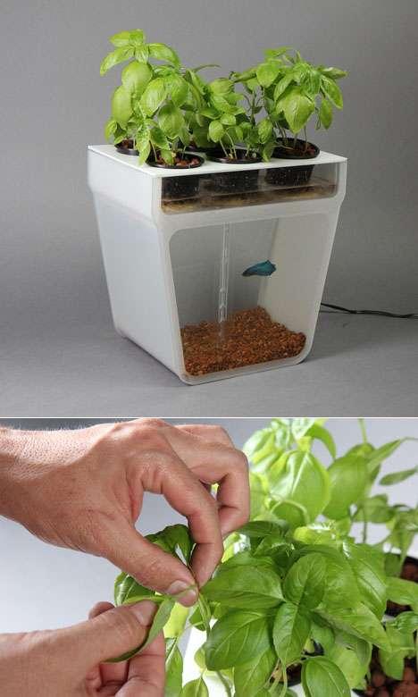 micro-aquaponia