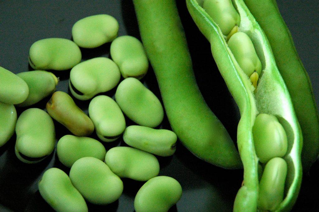 fava_beans