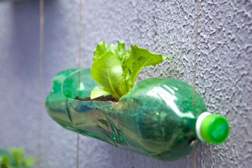 garrafa pet horta vertical