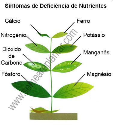 sintomas-deficiencias-plantas