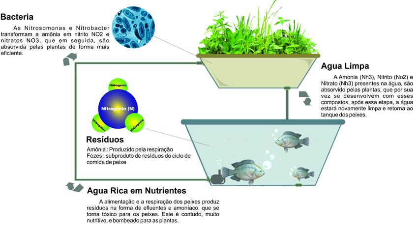 aquaponia-ciclo